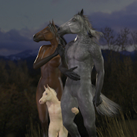 Equus Bundle M4 V4 K4